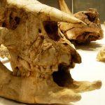 Museu em Sintra: conheça a História Natural